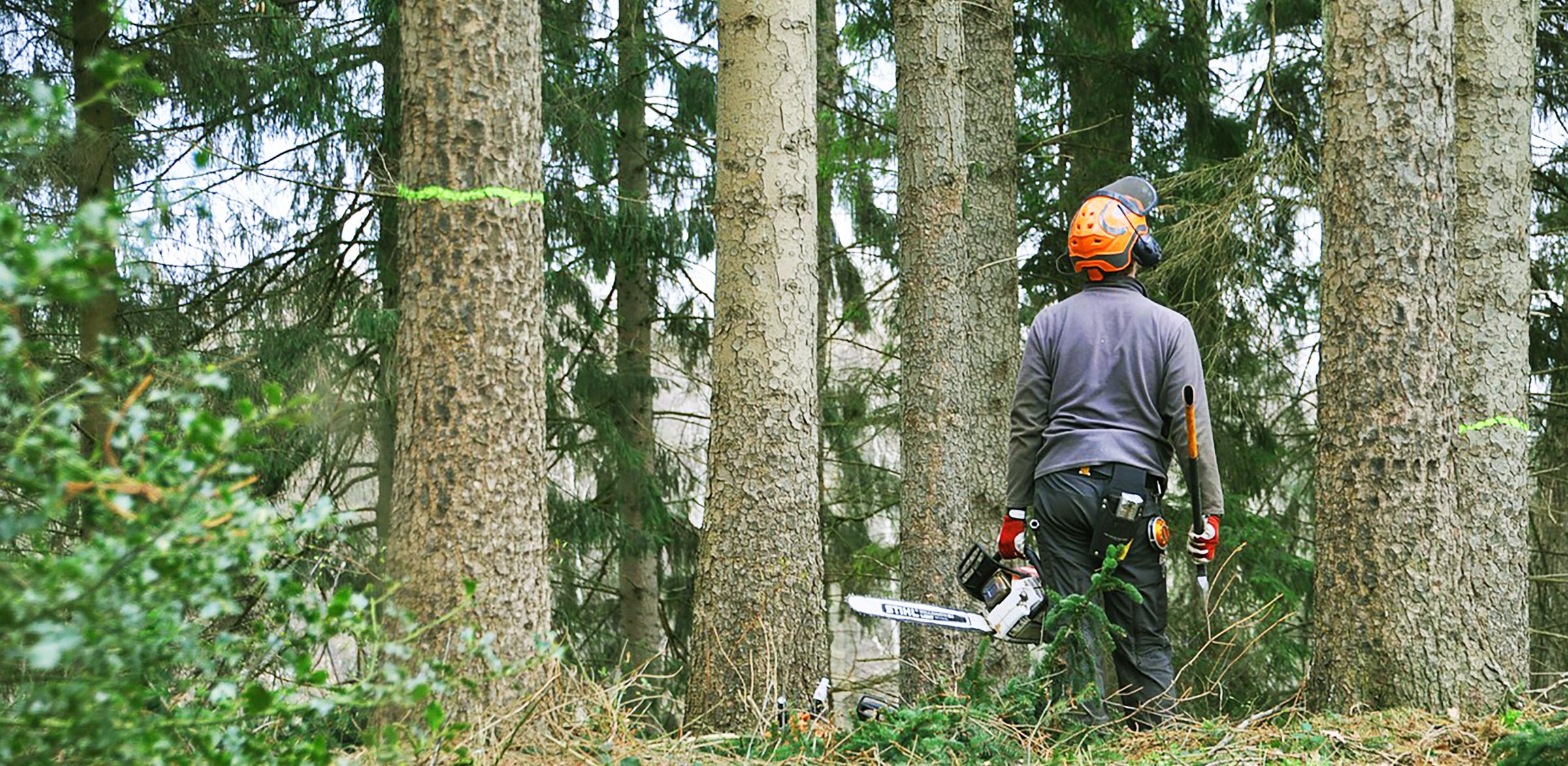baumpflege-langner-Jobs_Baumkontrolleur_Baumpfleger