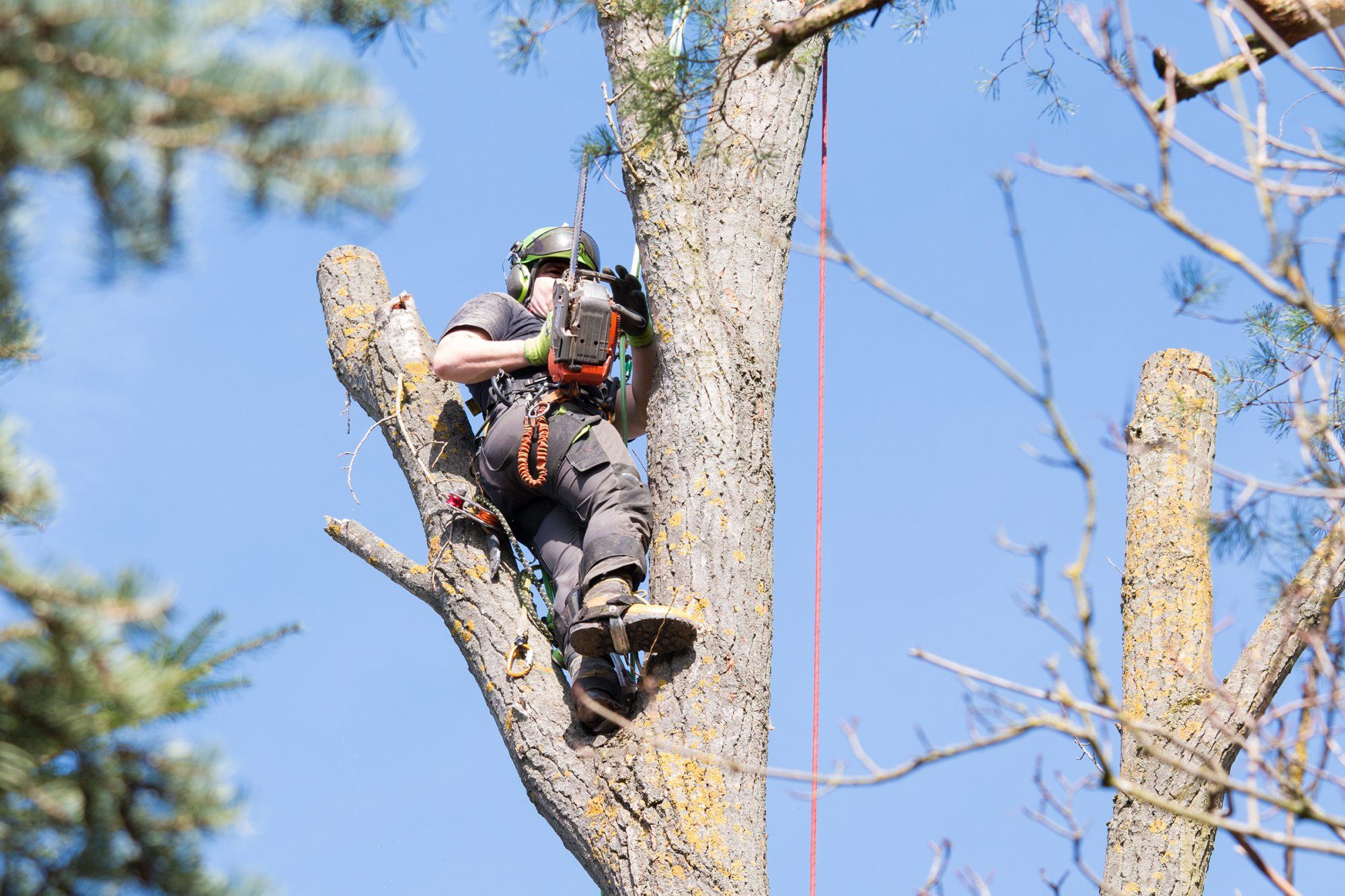 Baumpflege-Langner