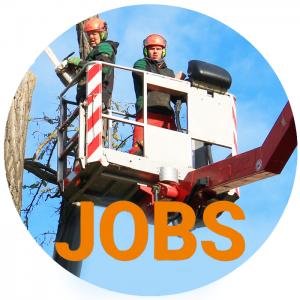 baumpflege-langner-Jobs_Baumkontrolleur_Baumpfleger_Startseite