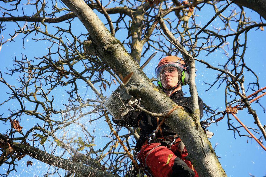 baumpflege-langner-Baumkontrolle_Baumfällung_Titelbild